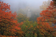 Tempel mit Ahorn Stockbilder