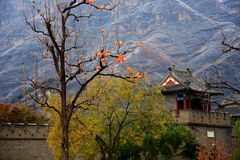 Tempel mit eisigem Apfel Stockfotografie