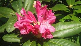 Tempel Newsam för blom- skärm royaltyfria bilder