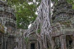 Tempel Siem Reap, Angkor Wat, Cambodja för Ta Prohm Fotografering för Bildbyråer