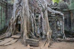 Tempel Ta Phrom, Kambodscha stockbilder