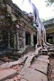 Tempel Ta Prohm mit großem Baum und Wurzeln Lizenzfreie Stockfotografie