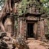 Tempel Ta Prohm mit riesigem Banyanbaum bei Angkor Wat Lizenzfreie Stockfotos
