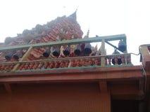 Tempel 13 van het tijgerhol Royalty-vrije Stock Foto
