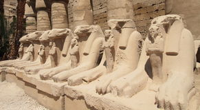Tempel van Karnak in Egypte Stock Foto