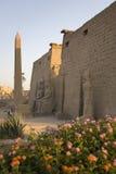 Tempel van Luxor, Egypte Stock Foto's