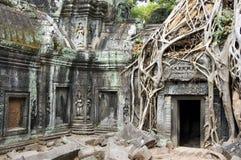 Tempel van Ta Phrom Royalty-vrije Stock Foto