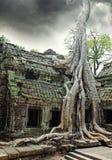Tempel van Ta Prohm in Angkor Wat royalty-vrije stock foto