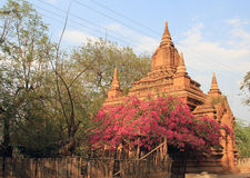 Tempel von Bagan 5 Stockfotografie