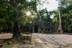 Tempel in wildernis - de tempel van Ta Prohm Stock Fotografie