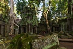 Tempel in wildernis - de tempel van Ta Prohm Stock Afbeelding