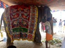 Tempelelefant royaltyfri bild