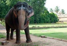 Tempelelefant arkivbilder