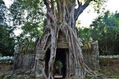 Tempeljordning av Cambodja Arkivfoton