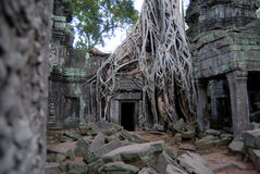 Tempels van Angkor, Kambodja Stock Fotografie