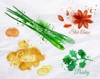 Tempera o anis de estrela da aquarela das ervas, salsa,