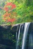 Tempera a rotação Cachoeira que flui do penhasco, folhas de bordo foto de stock