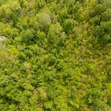 Temperate forest. Aerial view of a decidous temperate forest. Square composition Stock Photography