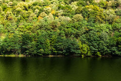 Temperate forest in autumn Stock Images
