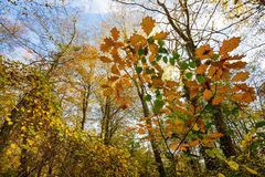 Temperate forest at fall Stock Image