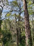 Temperate forest trees in a park. Backdrop for environmental, nature and botanical ads, flora and ecology care for a clean air stock photography