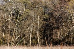 Temperate las w zimie Zdjęcia Royalty Free