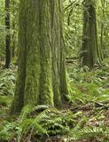 Temperate pacific northwest rainforest scene Stock Image