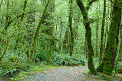 Temperate rain forest Royalty Free Stock Photography