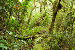 Temperate rain forest. Royalty Free Stock Photo