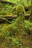 Temperate Rainforest Stock Photography