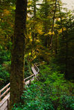 Temperate Rainforest Stock Photo