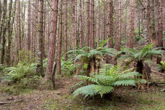 Temperate rainforest. Catlins, New Zealand royalty free stock image
