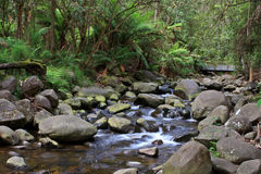 Temperate Rainforest Creek Royalty Free Stock Photos