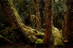 Temperate rainforest, Gordon River Stock Photo