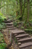 Temperate rainforest Stock Images