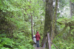 Temperate Rainforest with People on Boardwalk Royalty Free Stock Photo