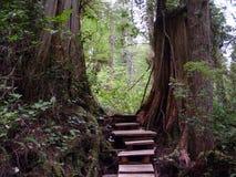 Temperate Rainforest of Tofino Stock Images