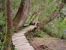 Temperate Rainforest of Tofino Royalty Free Stock Images