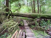 Temperate Rainforest of Tofino Stock Photos