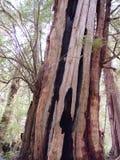 Temperate Rainforest of Tofino Stock Photo