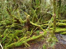 Temperate Rainforest Royalty Free Stock Image