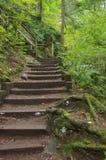 Temperate tropikalny las deszczowy Zdjęcia Royalty Free