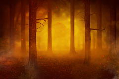 Temperature rise impact to the fires in the forest Stock Image