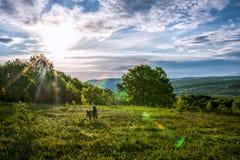 Tempere o céu animal do sol do nascer do sol do por do sol da grama de cão da natureza da floresta Fotografia de Stock