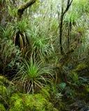 Tempered rainforest Stock Photo