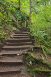 Tempererad rainforest Royaltyfria Foton