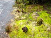 tempererad rainforest Fotografering för Bildbyråer