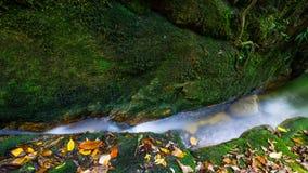 Tempererad regnskog för ström Royaltyfri Foto