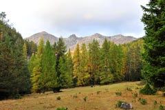 Tempererad skog av den schweiziska nationalparken Arkivbilder