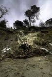 tempesta baltica del litorale Fotografia Stock Libera da Diritti